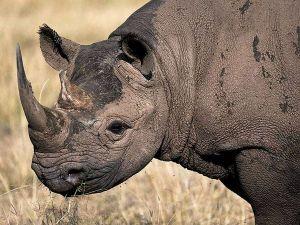 rhino skin
