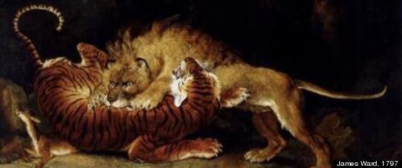 lion versus tiger